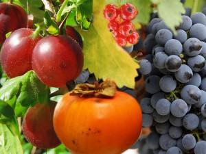 Citrus and berries